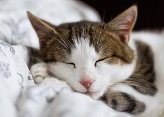 @merry_kuma めりーさんお絵描きお疲れ様です 朝晩はまだ寒いですにゃ体調崩さないように気を付けて下さいにゃ モドちゃんにもよろしくですではまた明日ねおやす(bv)bみっ zzzzz.゚゚゚゚ http://pic.twitter.com/CcO8bLI1yE  ちゃとらん (@thetyatoran) April 27 2017