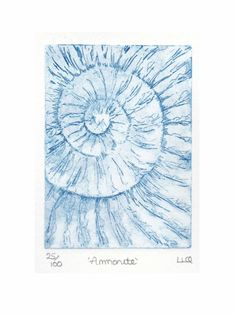 Etching no.25 of an ammonite fossil in an edition of 100 £30.00