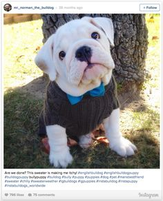 42 Of The Most Important Puppies Of All Time – 21. This dapper guy in his best sweater. http://www.pindoggy.com/pin/9945/