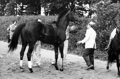 Ruffian: Horse Racing's Greatest after the accident. Notice the inflatable cast on her leg to stabilize it while getting the ambulance.