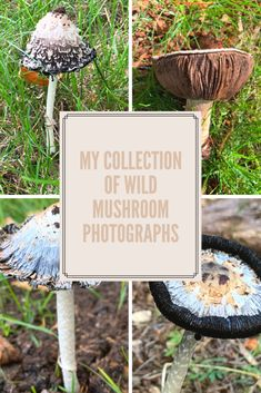 Wild Mushrooms, Stuffed Mushrooms, Mushroom Pictures, How To Find Out, Photographs, Trees, Outdoors, Watch, Nature