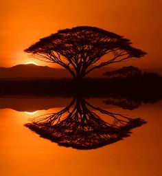Red tree silhouette & reflection