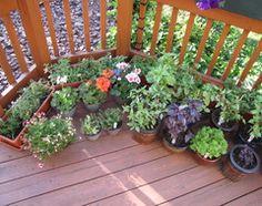 11 Essential Herbs for Your Edible Garden