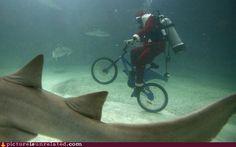 santa-sharks