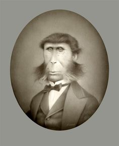 """Travis Louie, George, 2012, acrylic on board, 10 x 8""""      In 1897, George Clark came to the realization he was mostly monkey. Max and Dora Clark adopted George when he was an infant. They sent him to all the """"right"""" schools. He became an accountant and handled the family's books. When his brother, Phillip, brought him to the Secret Pet Society he found out that he was really the family """"pet.""""  at William Baczek Fine Arts  www.wbfinearts.com"""