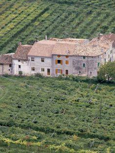 Vineyards Near Fumane in the Centre of the Valpolicella Classico Zone, Fumane, Veneto, Italy. Photo: Michael Newton