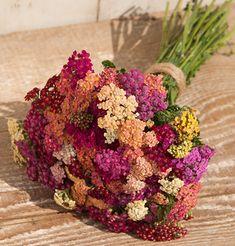 Flower Achillea Yarrow Colorado Mix (Multi Color) 100 Organic Seeds by David's Garden Seeds Garden Pests, Garden Tools, Garden Ideas, Garden Inspiration, Garden Supplies, Cut Flowers, Dried Flowers, Summer Flowers, Spring Flowers