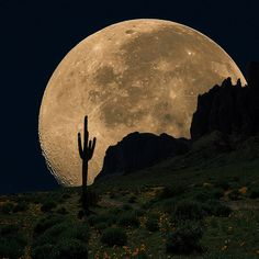 Saguaro cactus and the moon!  I love living in the west!!