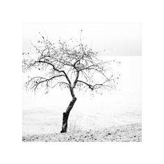 Apple tree's winter by StephanePellennec.deviantart.com on @DeviantArt
