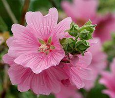 Pink Flower by fluffydragon, via Flickr