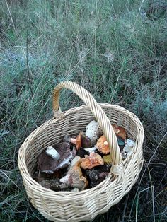A basket like this is essential to mushroom hunters....