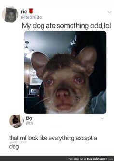 Really Funny Memes, Stupid Funny Memes, Funny Relatable Memes, Haha Funny, Funny Stuff, Random Stuff, 9gag Funny, Funny Texts, Humorous Animals