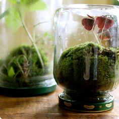mini terrarium selber machen moos marmeladenglas auf kopf gestellt