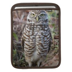 >>>Low Price Guarantee          Burrowing Owl 5 iPad Sleeves           Burrowing Owl 5 iPad Sleeves Yes I can say you are on right site we just collected best shopping store that haveReview          Burrowing Owl 5 iPad Sleeves Review on the This website by click the button below...Cleck Hot Deals >>> http://www.zazzle.com/burrowing_owl_5_ipad_sleeves-205791965350702131?rf=238627982471231924&zbar=1&tc=terrest