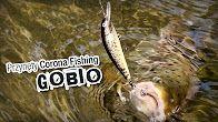 Wobler pstrągowy Gobio w akcji! #wędkarstwo #przynęty #filmywędkarskie https://www.youtube.com/user/CoronaFishing/videos