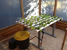 My first hydroponic system.