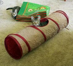 best cat toy in the world