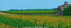 Pindar Vineyards, Peconic