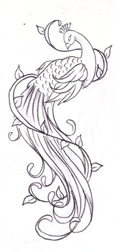 Peacock Tattoo Sketch By Nevermore Ink Hfx