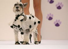 Born to be a Dalmation!