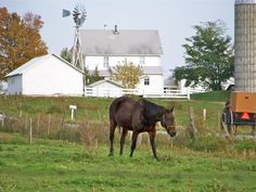 """Amish Neighbors"" Photo Credit: Kathy Chirdon Heather Heights-Amish County Side New Wilmington, PA"