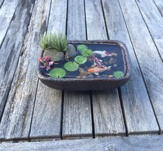 Miniature Koi Pond in Cute Stoneware Dish
