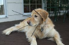 Great For Blind Dog In New Home Zip Ties In Dog Collar