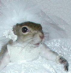 Sugar Bush's Wedding Portrait
