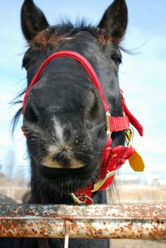 Our top ways to help horses and other equines.