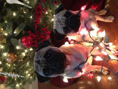 Merry Christmas from Cooper & Lilly!!