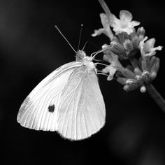 26 best pictures of flowers in black white images on pinterest this is the beautiful butterfly flowers black and white white wallpaper background picture and layout mightylinksfo