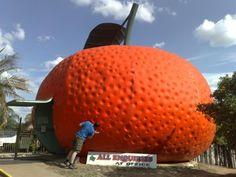 The Big Mandarin - Mundubbera, Qld