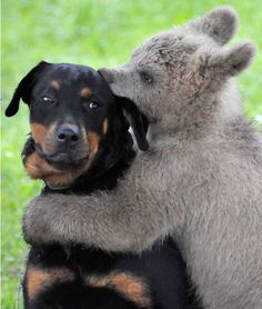 Bear cub plays with the dog