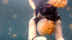 Lost in Jellyfish Lake(video)