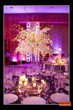 Boston Wedding Photography, Boston Event Photography, Boston Wedding Decor, Wedding Centerpieces, Wedding Flower Inspiration, White Wedding Flowers