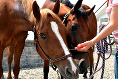 Beat the Heat - Ways to Cool Your Horse blog post #Absorbine #Cool #Horse