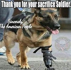 Thank You for Your Sacrifice, Soldier ♡ <----God bless the military dogs, too! Military Working Dogs, Military Dogs, Police Dogs, Military Life, Animals And Pets, Funny Animals, Cute Animals, I Love Dogs, Cute Dogs