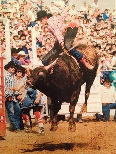 The great Lane Frost on the great Red Rock - I don't know if this is durin' RR's pro days when Lane or no one rode him or if's during The Challenge of Champions in the year after RR retired from Pro Rodeo n in the end Lane took it Rodeo Cowboys, Real Cowboys, Lane Frost, Cheyenne Frontier Days, Bucking Bulls, Rodeo Events, Professional Bull Riders, Rodeo Life, Bull Riding