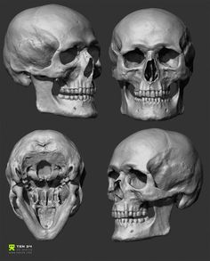 A luscious fuck-ton of human skull references. Two of the above images are GIFs so wait for em to load. And I just thought of something that really ought to be mentioned; A very common mistake on drawing skulls is the eye sockets. Human Skeleton Anatomy, Human Anatomy Drawing, Human Figure Drawing, Skull Reference, Drawing Reference Poses, Anatomy Reference, Human Reference, Head Anatomy, Anatomy Art