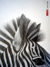 'zebra close up' Realistic Drawings, Cool Drawings, Animal Close Up, Pencil Photo, Zebra Art, Animal Makeup, Art Prints Online, Africa Art, Animal Sketches