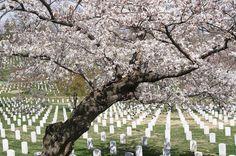 Estados Unidos O Cemitério Nacional de Arlington, em Washington D.C., é o mais tradicional cemitério militar dos Estados Unidos. Também está sepultado no local o ex-presidente John Kennedy. O tour guiado custa 9 dólares