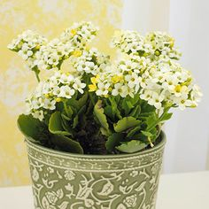 House plants for a forgetful gardener.