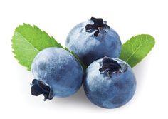 Blueberry Yaban Mersini