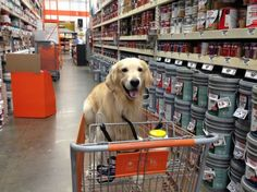 "Home Depot ""Please choose the blue paint, it will look great when I step in it and walk all over the house!"" - used to allow dogs in Canada but no more due to 1 incident."
