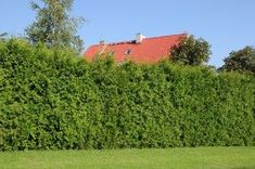 Best Hedges to Plant - Fast Growing Privacy Hedges