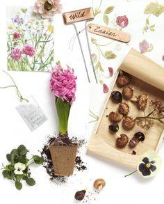 Home and Garden Sanoma Studio5982 Bas van Tol
