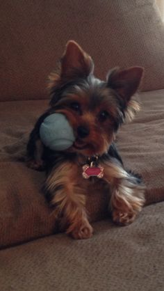 Cute Small Dog - Repin If You Love Dogs or Like Us On Facebook. Click Image To Visit https://www.facebook.com/pages/Dont-Hurt-Me-Im-Your-Best-Friend/636479679717238