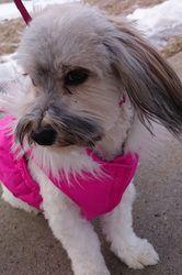 Cashew. She's such a pretty girl!