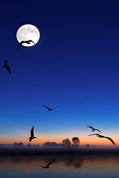 atraversso:  Night Stream  by Mustafa Faour..... absolutely mesmerizing.....