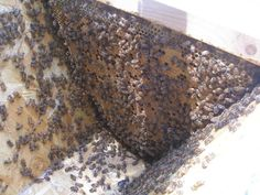 Beautiful huge personal experience of keeping bees: Thy Hand Hath Provided: Beekeeping